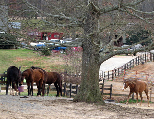 Horses Require Rescue As Georgia Drought Persists Npr