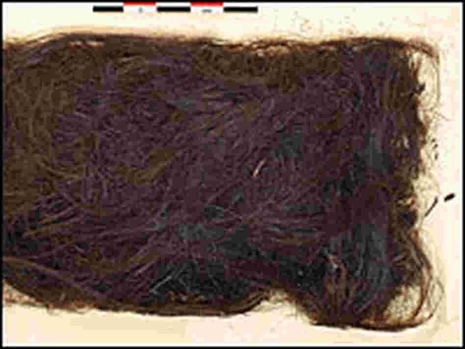 3,000-year-old human hair sample excavated from Greenland