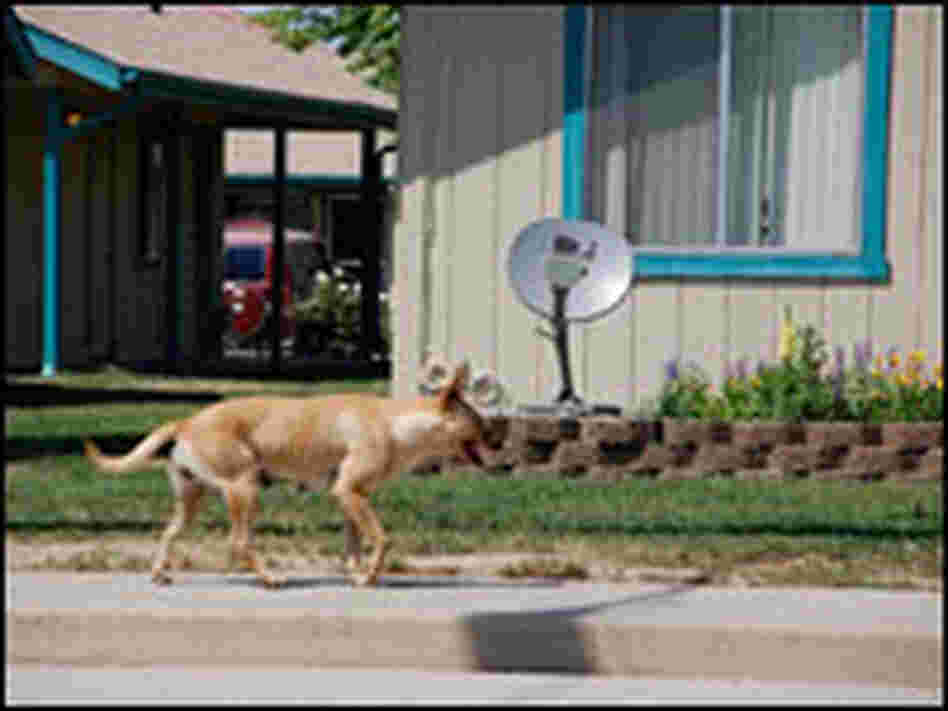 A stray dog roams the streets of Earlimart, Calif.