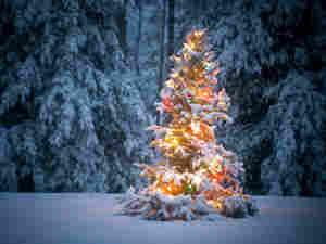 Christmas Tree (iStock) (300)