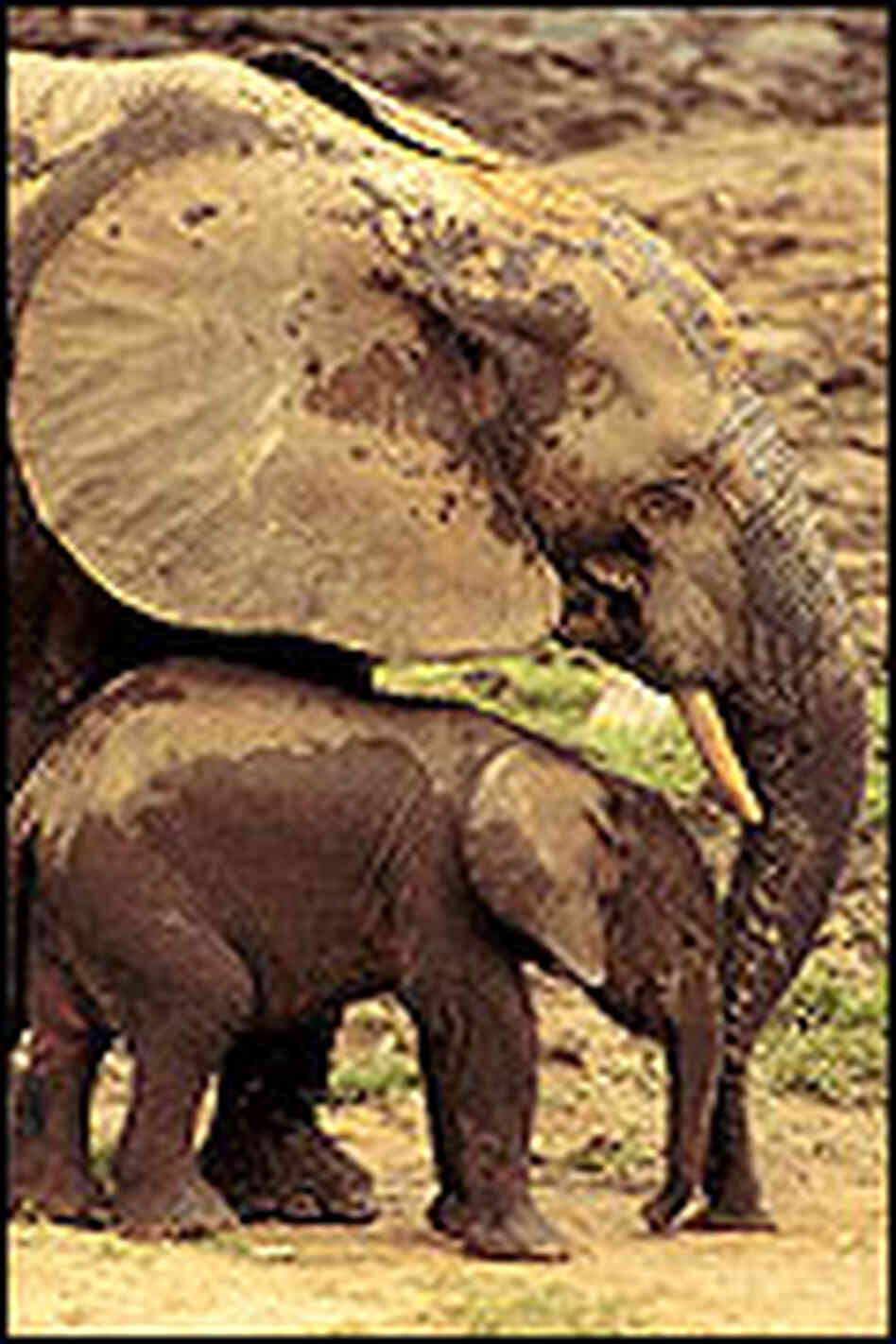 An adult and child elephant at the forest clearing.
