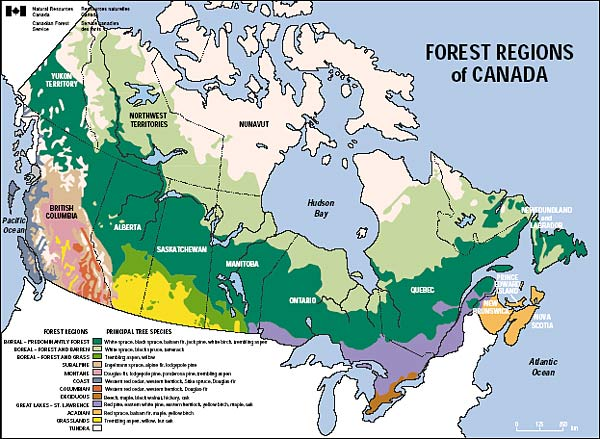 Boreal Forest Map Canada NPR
