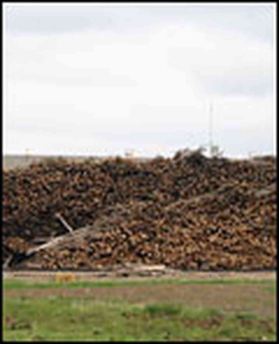 A log yard with a giant pile of trees