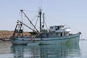 The Gus-D, a wood-hulled shrimp trawler