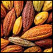 A variety of cacao pods. Credit: Ten Speed Press