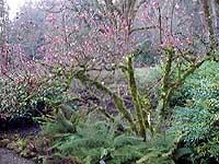 Viburnum in Moss