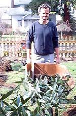 Jay with oak