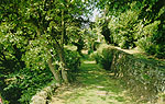 A view of the paths that Wordsworth walked