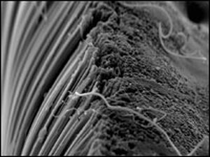 Spaghetti-like structures -- carbon nanotubes viewed under an electron microscope.