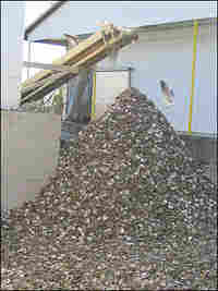 Pile of Oyster Shells Sits Outside Processing Company