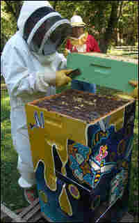 Neil Gaiman harvests honey.