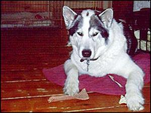 Daniel Pinkwater's older dog, Lulu