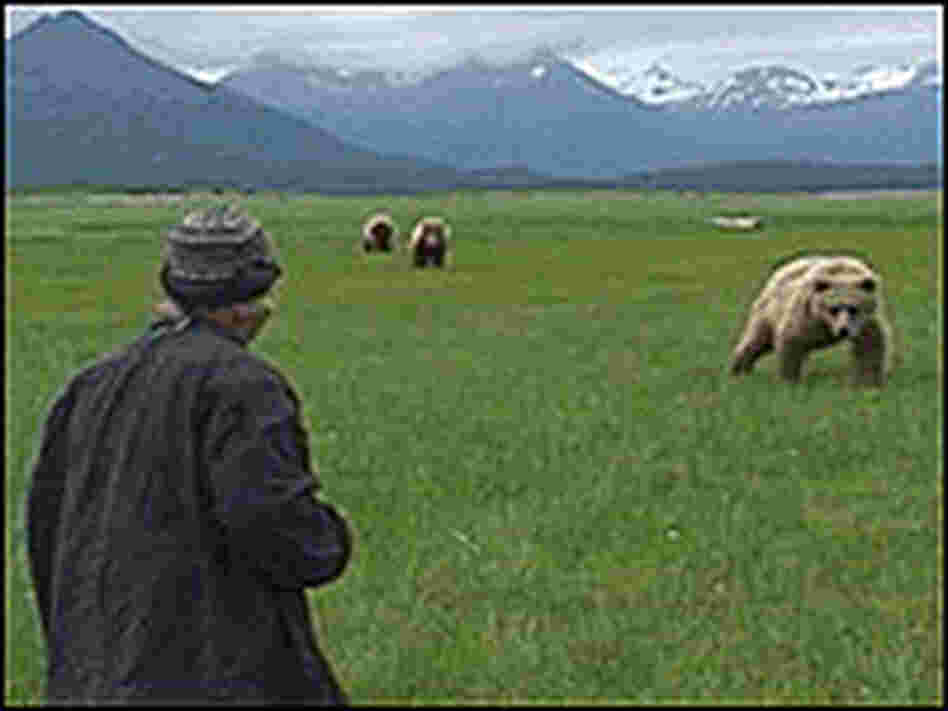 Timothy Treadwell confronts several grizzly bears.