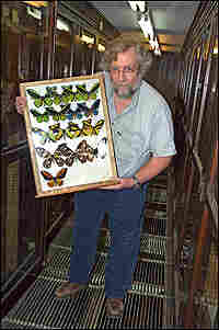 Dr. John Rawlins with a collection of butterflies.