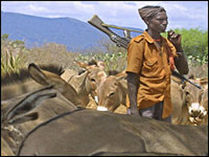 A Turkana man guarding livestock
