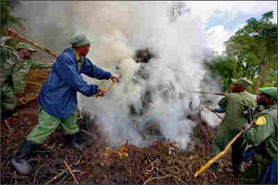 An illegal charcoal kiln is dismantled by rangers and U.N. troops.