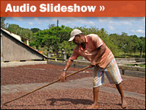 Audio Slideshow: Tropical Roots of Chocolate