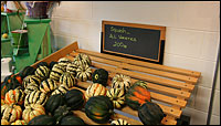 Students grow different varieties of squash to sell.