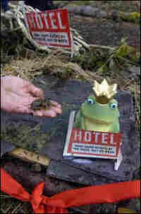 The frog hotel in Edinburgh.