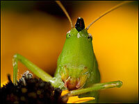The Thrill of the Trill: Capturing an Insect Symphony : NPR